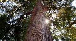 Tree Pic